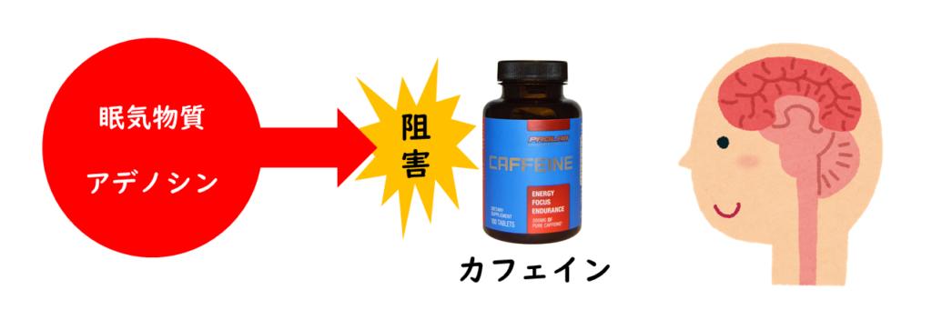 アデノシンとカフェインの働き