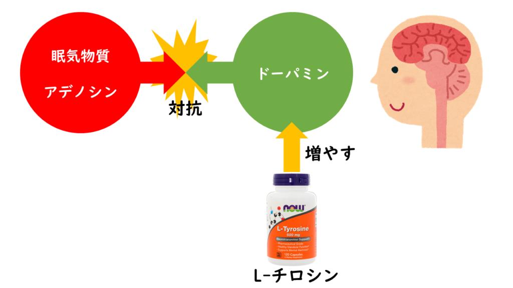 アデノシンとL-チロシンの働き