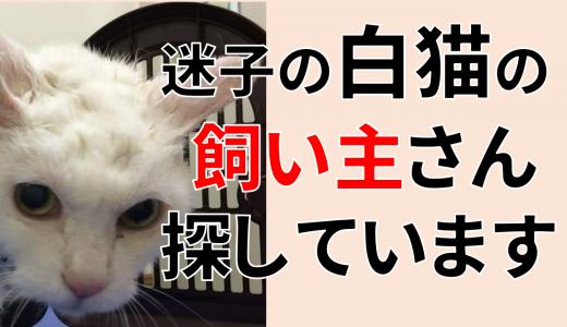 【追記あり】迷子の白猫の飼い主さん探しています
